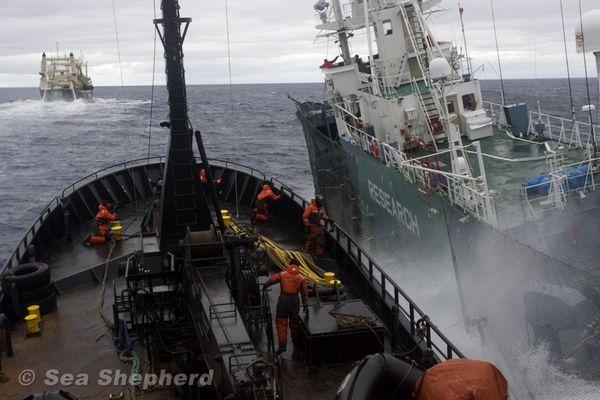 Balene: Giappone perde sfida in mare in attesa della Corte Internazionale