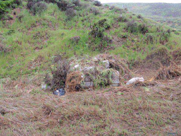 Santa Rosa Cammo'd bales