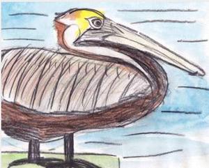 OliviaBouler_pelican