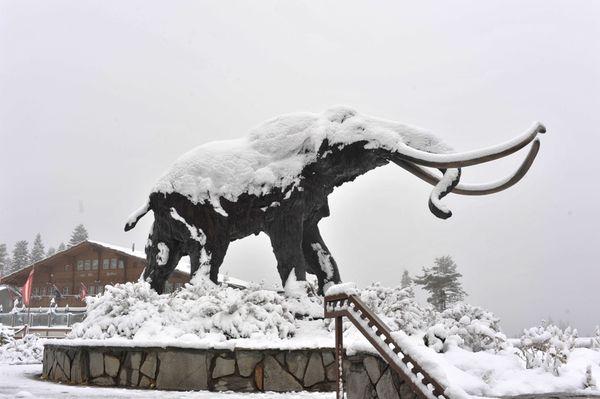 Mammoth1
