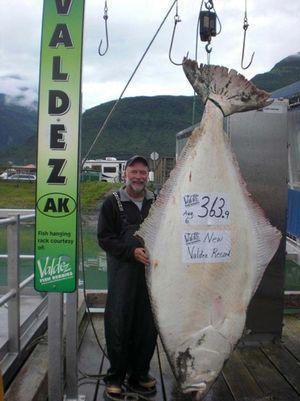 Valdez halibut