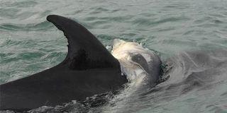 Dolphin_460x23038636