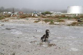 Muddy Chick