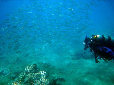 Dfg-diver_0647