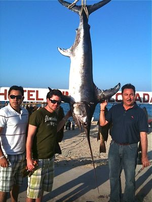 Narciso & Swordfish