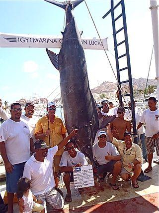 Grander Marlin