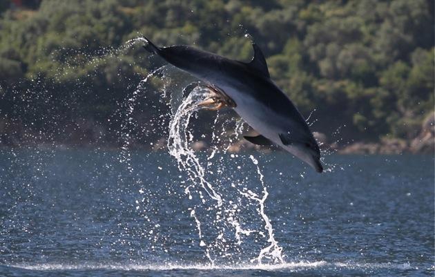 Dolphinoctopus