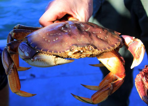Is the crab hawk legal for use in california pete for Crab fishing game