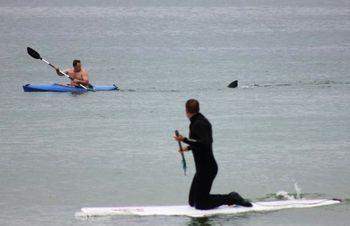 Copy of Cape Cod Shark.JPEG-04dc6-2170