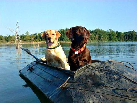 Dogs in canoe