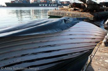 3-FIN WHALE SHIP STRIKE-2013Feb27-ASchulmanJaniger-IMG_0407-c1-scr