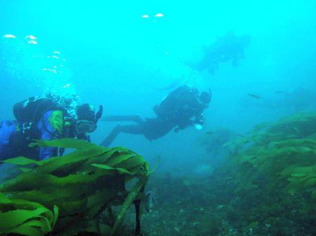 Divers-stein