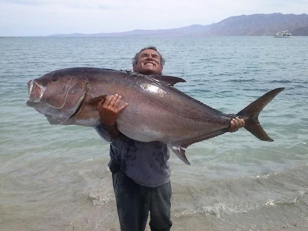 Amberjack Fish