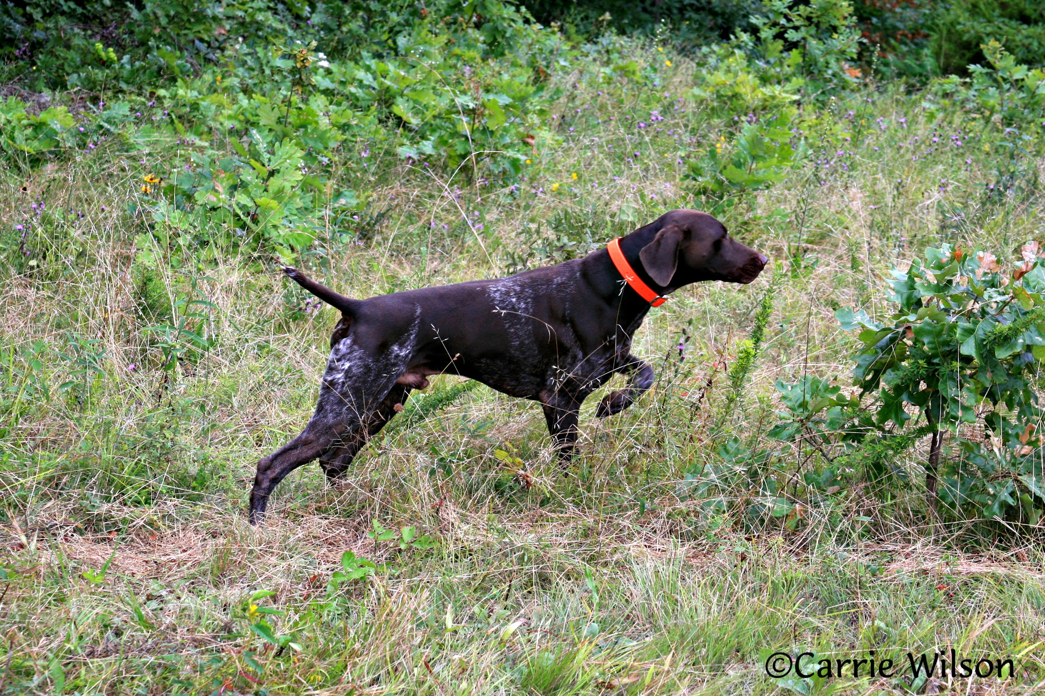 Is it legal to use GPS tracking devices on dogs while