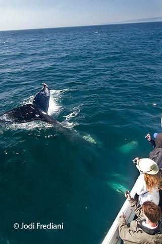 Montereywhale:Frediani