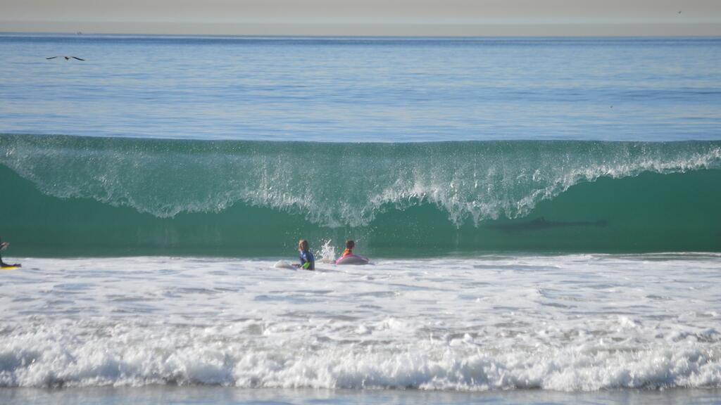 Photoing Shark In Manhattan Beach Wave Was Most Likely A Bottlenose Dolphin