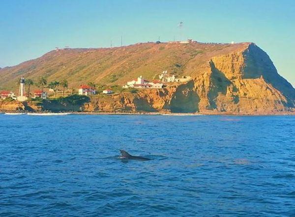 Sharkdolphin