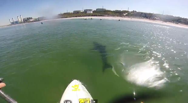 Shark2.jpeg