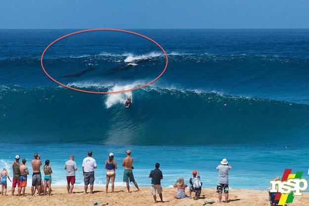 Surfingwhalescopy