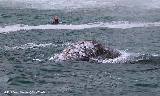 Whalebeach4