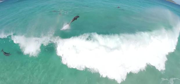 Surfingdolphins.jpeg