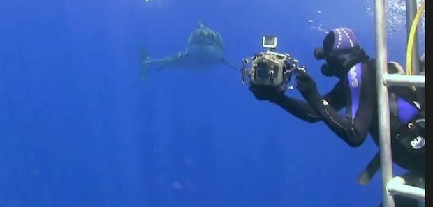 Sharkselfie3.jpeg