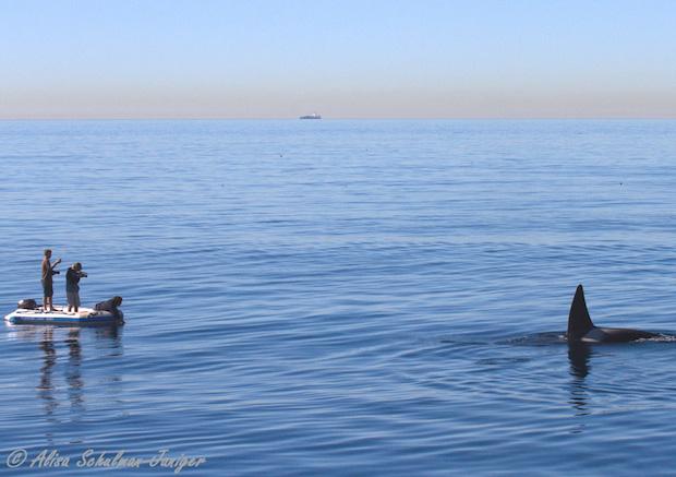 4b-ORCAS-2015-01-06-Alisa Schulman-Janiger-IMG_6674-c2-cr