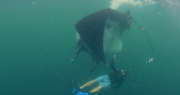 Josh Stewart attempts to take photo of manta, before it sweeps him up;  video screen grab