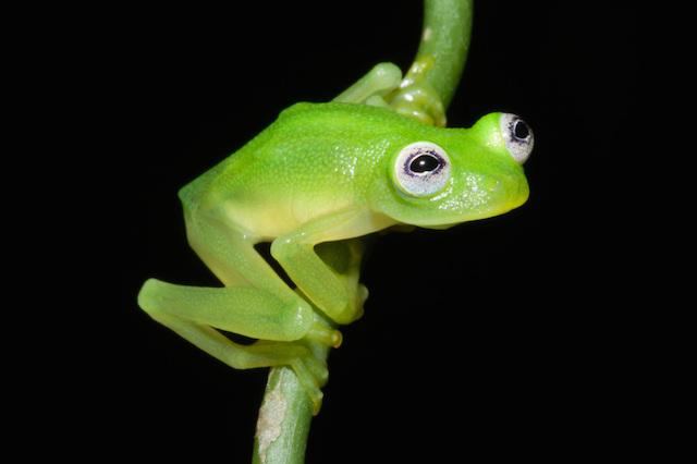 Frog2-copy