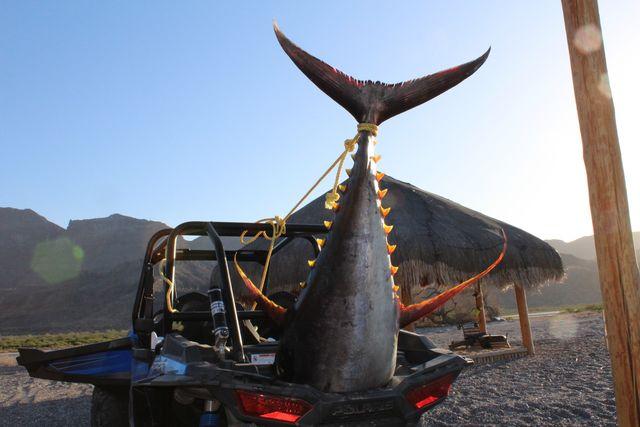 Tuna in truck