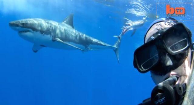 Sharkselfie1.jpeg