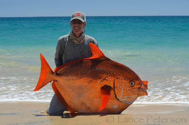 Baja california fishing guide lands rare opah or moonfish for Hawaiian moon fish