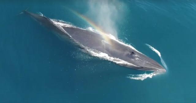 Brydeswhale.jpeg