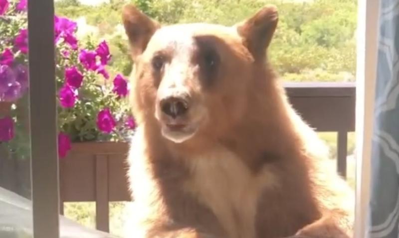 Bear-mammoth
